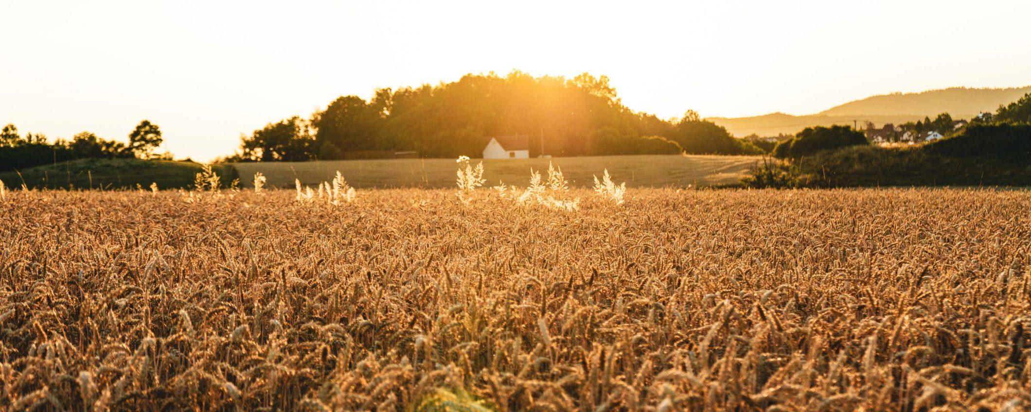 laurea online in Agraria